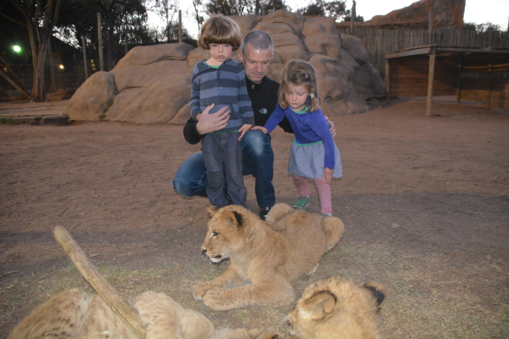 Staffan, Phineas, and Lion-snack, immediately post my biting: you can see the hesitance to continue the petting.