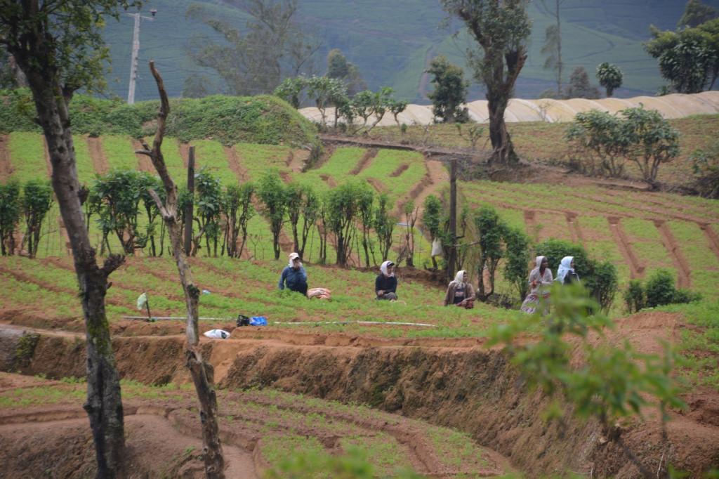 Tea plantation workers on a break