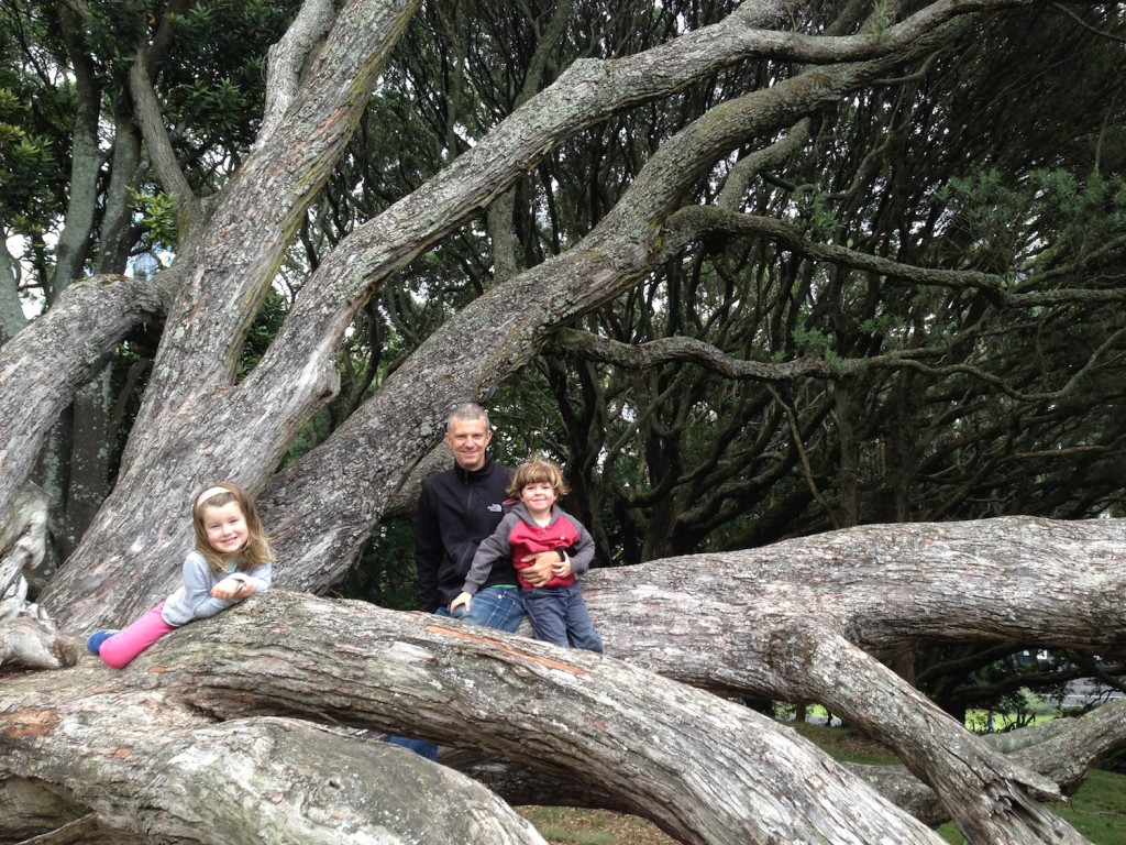 Playing in a park full of climbing trees