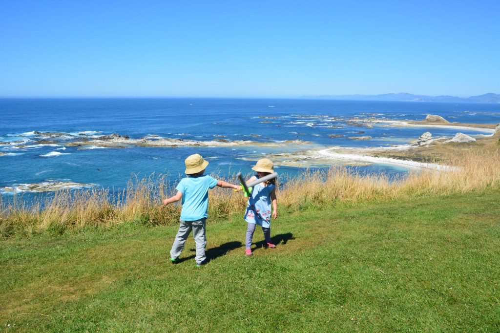 A duel to the death, cliffs of Kaikoura